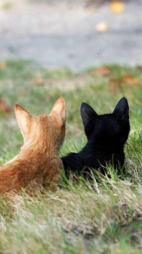 """<span style=""""color: #000000;""""><span style=""""font-family: Arial, sans-serif;""""><span style=""""font-size: medium;"""">Domestic cats rediscover the countryside</span></span></span>"""