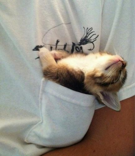1 – Kitten Sleeping in T-Shirt Pocket