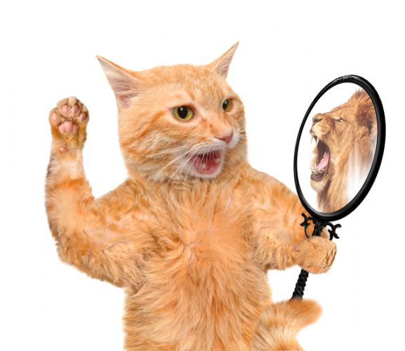 Feline personality