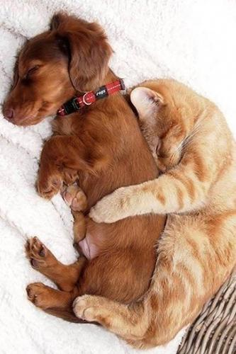 Proof that dogs and cats can get along