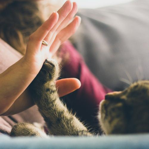 Cat People Personality