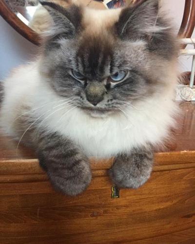 A new feline celebrity