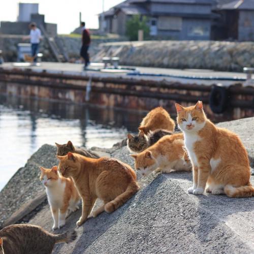 Aoshima, or Japan's Cat Island