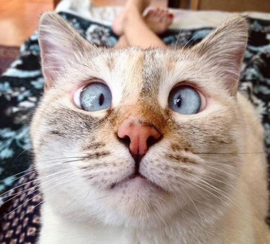 Muni, the Cross-Eyed Kitty