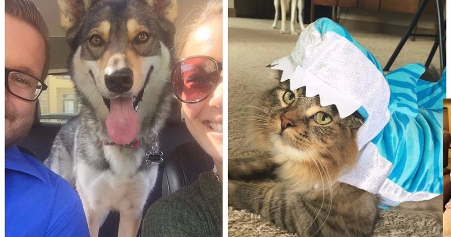 A dog went with his family to the shelter to choose his new brother and to the surprise of his hu...