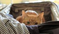 The Valuable Life Lessons That Cats Teach Us