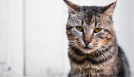 WET of DRY food? Which is better for your cat?