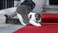 For Overly Stressed Cats, Musical Therapy Might Be Just the Thing They Need