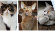 What Can You Tell About Your Cat From Their Meows?