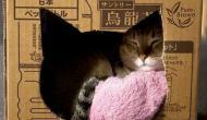 7 Tips For Beautiful Cat Photos