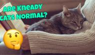 Are You Making These Mistakes in Feeding Your Cat?