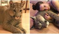 The Airline Lost Her Cat, and What She Did To Get Him Back Is Incredible!