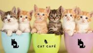 4 Cat Museums Every Feline Lover Must Visit