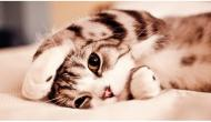 8 Signs that Your Cat Loves You (a lot)