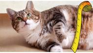 This Contagious Feline Disease Could Be Fatal To Your Cat