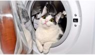 5 Cruel Things You Do To Your Cat Without Realizing
