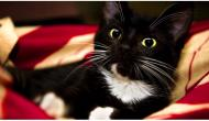 6 Mistakes that All Cat Owners Make