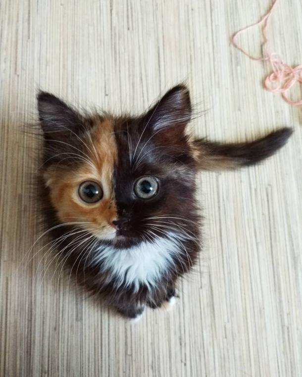 Yana, the two-faced cat