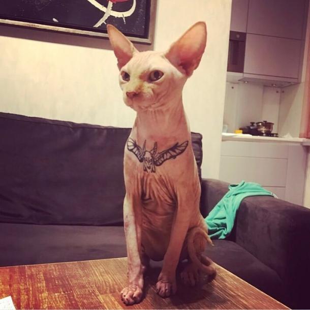 """Glamorous"" cat tattoo"