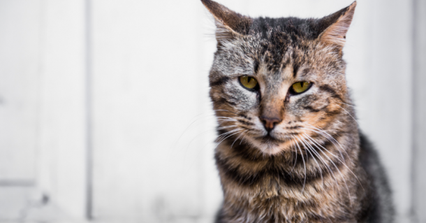 How to Care For Your Aging Cat