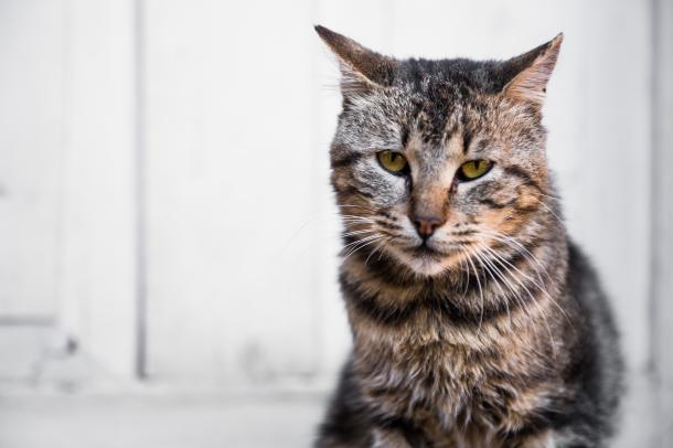 Caring For Senior Cats