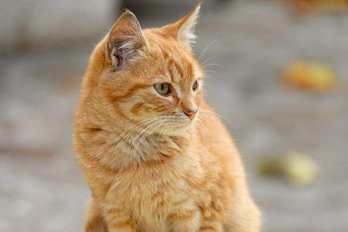 This ginger cat lived years without his family...