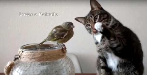 A cat and a bird