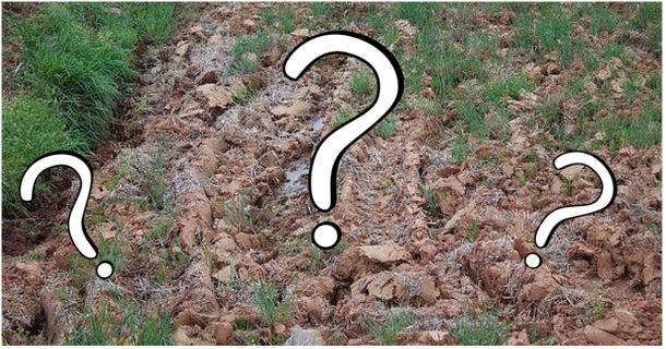 CHALLENGE: Can You Find the Cat in These Pictures?