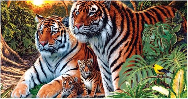 How many tigers are in the image?