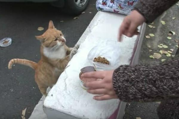 Feeding kitties