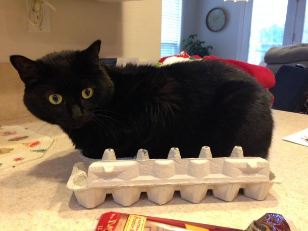 """""""No, I'm not at all uncomfortable. I happen to like this box's shape."""""""