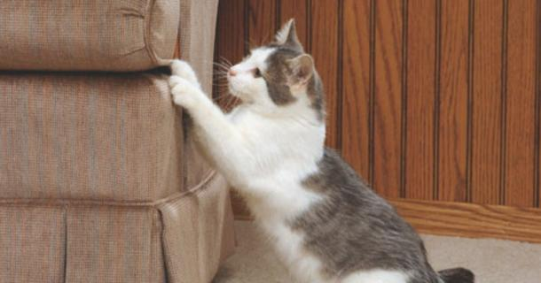 Tips To Keep Your Cat From Scratching Up The Sofa