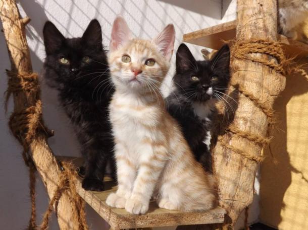 International Cat Breed Exhibition
