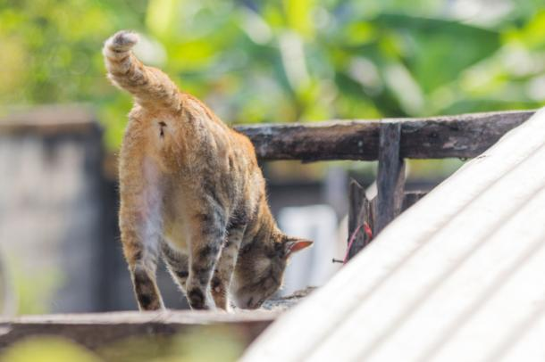 Strange cat greetings