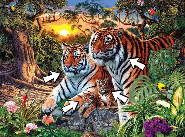 How many tigers are there?