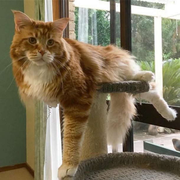 WORLD'S LONGEST CAT