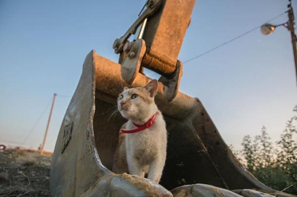 Móstik, The Cat.