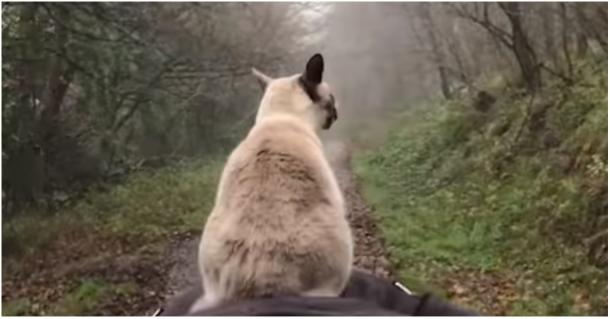 This Cat Has the Strangest Way of Taking a Walk