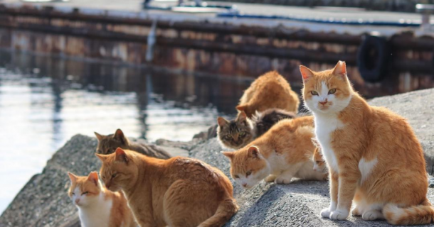 Amazing Places Around the World that Every Cat Lover Needs to Visit