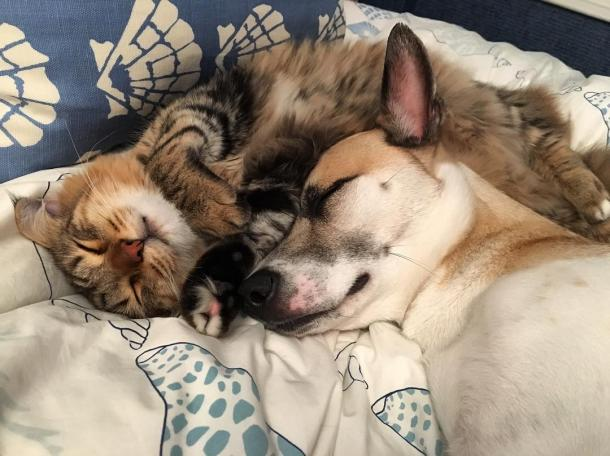 A beautiful friendship