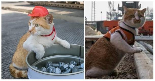 The supervisor of the WORK is a cat, you have to see it in action!