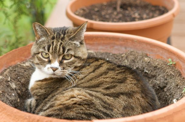 Plants and Cats: Mission Impossible