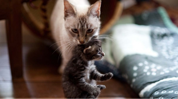 This Cat Snuck Into A Strangers House To Protect Her Babies