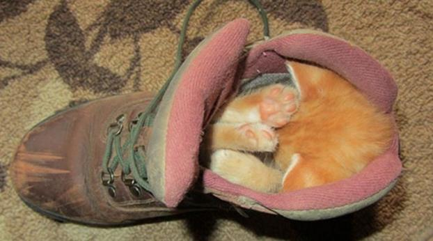 24 animals sleeping in unconventional places