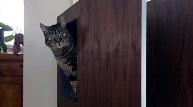 This Guy Invented an Incredible Bookshelf that Has Spaces for You AND For Your Cat!