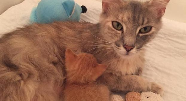 This Grieving Cat Comes Back to Life Again by Adopting an Orphaned Kitten
