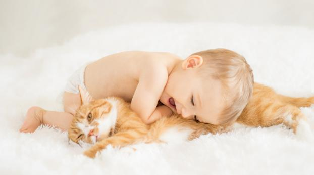 Cats and Babies: All the Tips You Need to Create a Beautiful Friendship