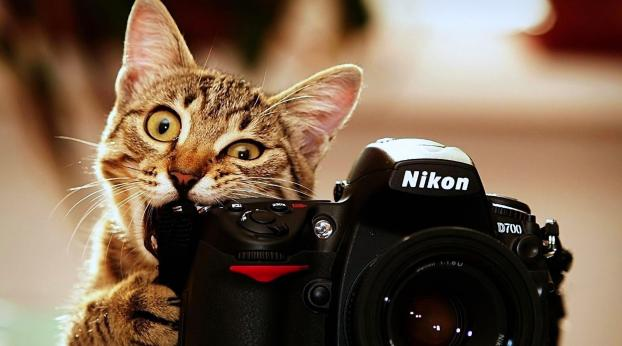 7 Tips For Beautiful Cat Photos