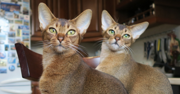 Male vs. Female Cats: What Are the Differences?