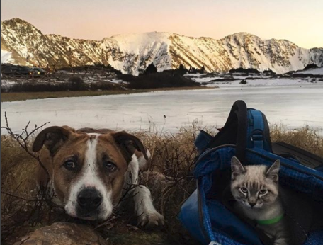 This Cat and Dog Are Living out the Dream Adventure